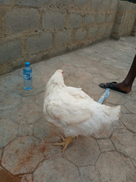 Nigerian woman praises her husband for buying Christmas chicken1
