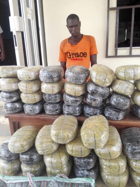 Wanted drug baron nabbed in Nasarawa as NDLEA intercepts 1330kg skunk in Edo