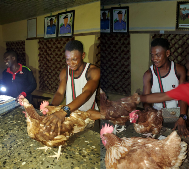 Man who sneaks into chicken farm at night cries in police station as hes arrested with stolen chickens