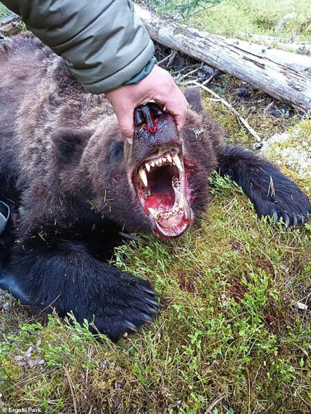 Bear kills and eats 16 year old boy after attacking tourist group in Russian national park photos