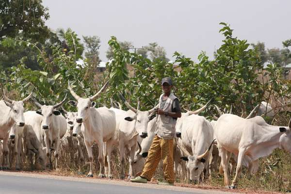 Farmers herders Clashes