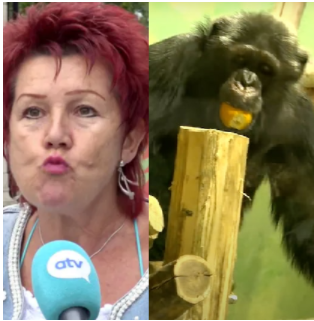 Woman banned from zoo after 4 year affair with chimpanzee